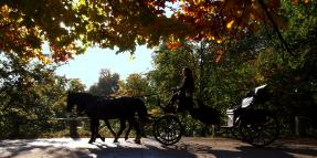 Horse-Drawn Carriage Accidents Claims