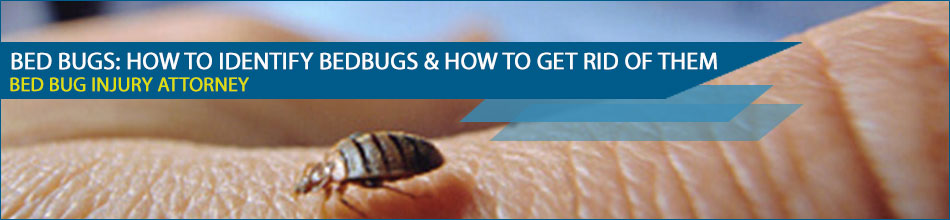 who is responsible for bed bugs - Landlord Responsibility for Bed Bugs