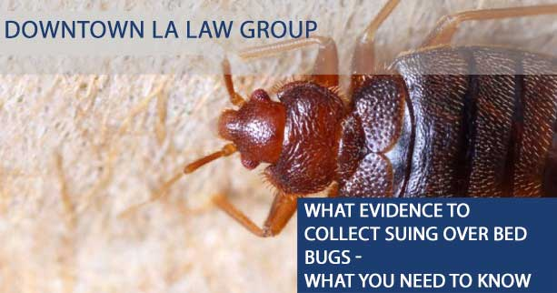 What evidence to collect suing Over Bed Bugs